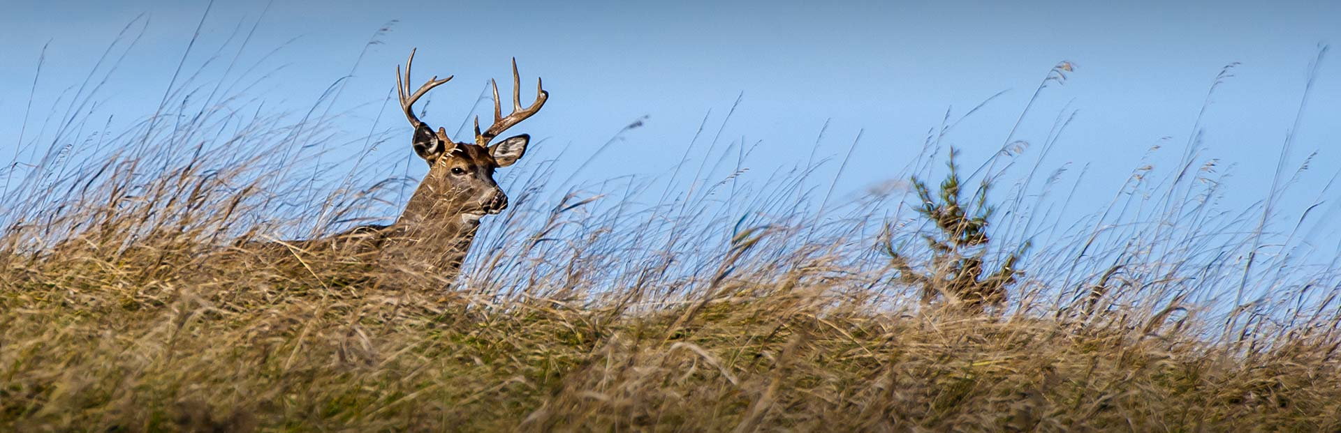 Kansas Whitetail Hunts