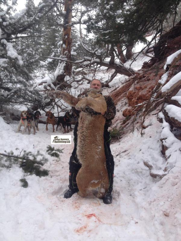 Colorado Mountain Lion Hunts - Xtreme Dream Outfitters